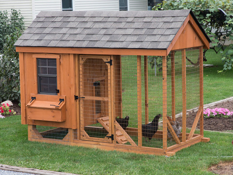 amish-built-chicken-coop-in-maryland-800x600-animalenclosures